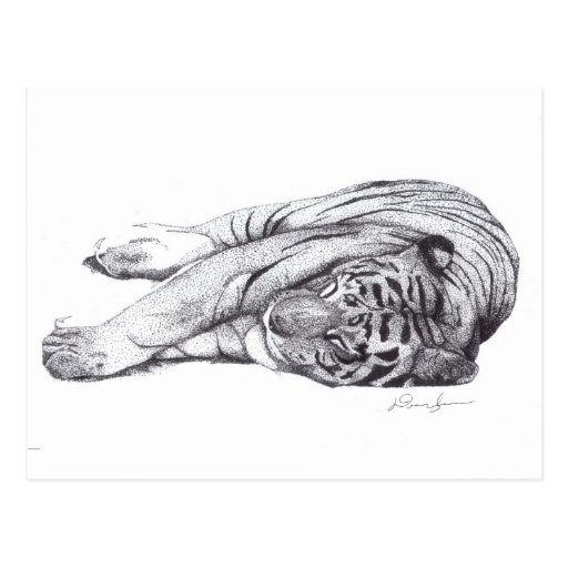 Tiger - Pen and Ink Postcard