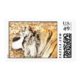 Tiger Photo By Julz '08 Postage Stamp