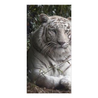 tiger photo card