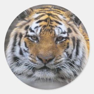 Tiger Photo Fog Close Sticker