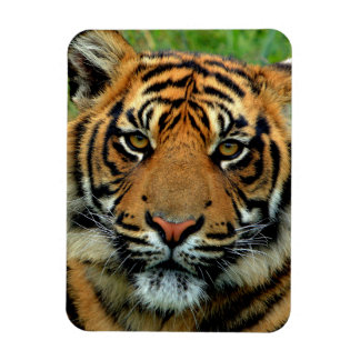 Tiger Photo Magnet