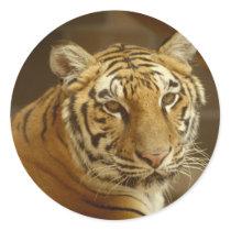 Tiger Picture Classic Round Sticker