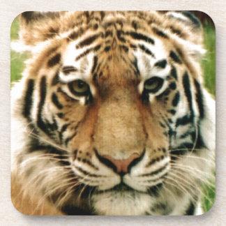 Tiger Picture Close Up Beverage Coaster