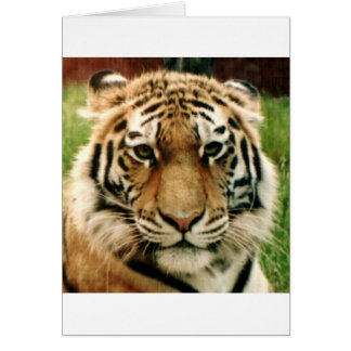 Tiger Picture Close Up Card