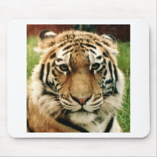 Tiger Picture Close Up Mousemat