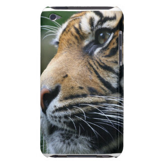 Tiger Picture iTouch Case Barely There iPod Cover