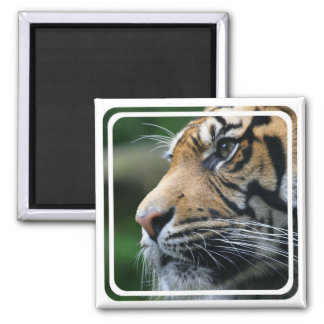 Tiger Picture Magnet Refrigerator Magnets
