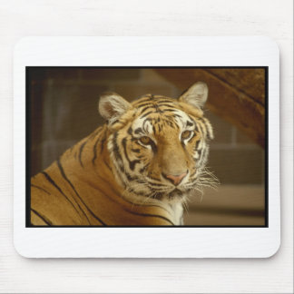 Tiger Picture Mouse Pads