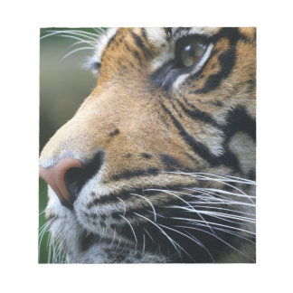 Tiger Picture Notepad