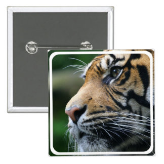 Tiger Picture Pin