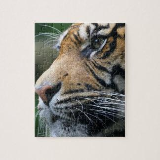 Tiger Picture Puzzle