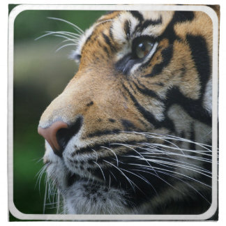 Tiger Picture  Set of Four Napkins