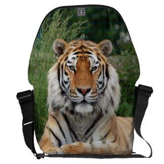 Tiger portrait beautiful close-up photo gift messenger bag