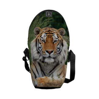 Tiger portrait beautiful close-up photo, gift courier bag