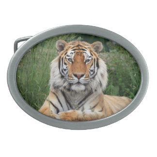 Tiger portrait beautiful close-up photo, gift oval belt buckles