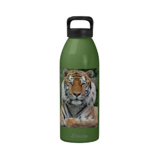 Tiger portrait beautiful close-up photo, gift reusable water bottle