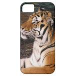 Tiger Portrait iPhone 5 Case