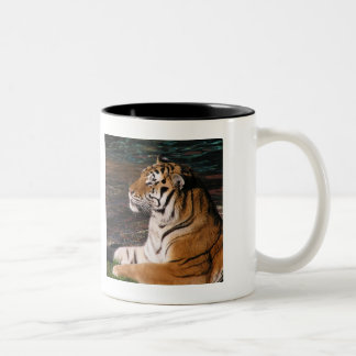 Tiger Portrait Mug