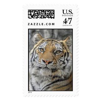 Tiger Portrait Postage