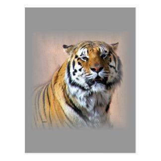 tiger post card