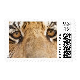 Tiger Postage