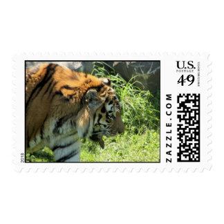 Tiger Postage Stamps