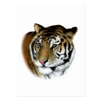 tiger postcard