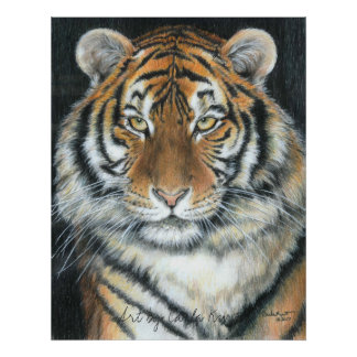Tiger Poster, Art by Carla Kurt Poster
