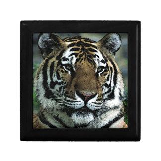 Tiger Power Gift Box