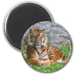 Tiger print 2 inch round magnet