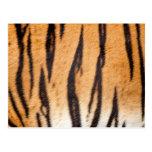 Tiger Print Postcard