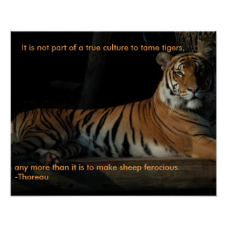 Tiger quote poster