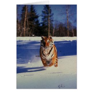 Tiger Racing Over Snow Greeting Card