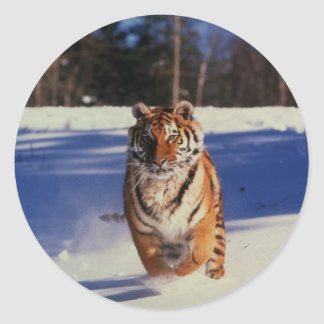 Tiger Racing Over Snow Classic Round Sticker