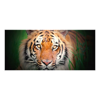 Tiger Rack Card