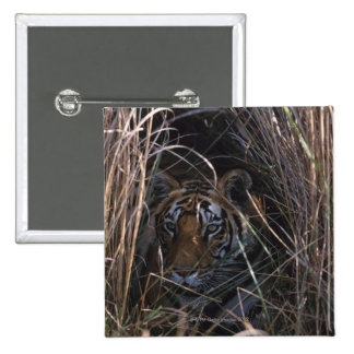 Tiger Reclines in Tall Grass Button