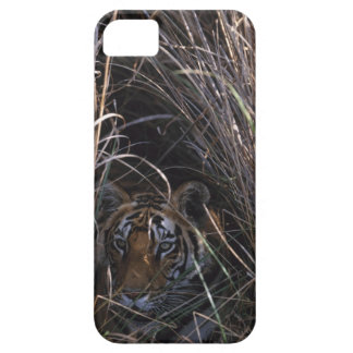 Tiger Reclines in Tall Grass iPhone SE/5/5s Case