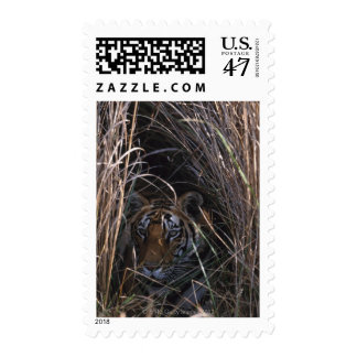 Tiger Reclines in Tall Grass Postage