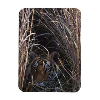 Tiger Reclines in Tall Grass Rectangular Photo Magnet