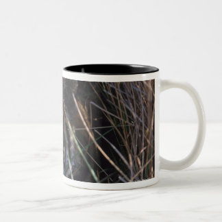 Tiger Reclines in Tall Grass Two-Tone Coffee Mug