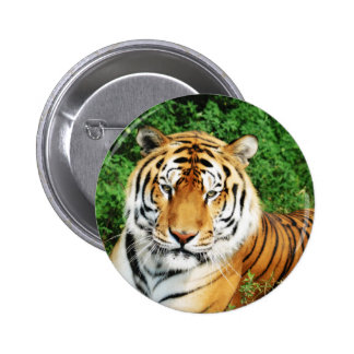 Tiger Relaxing Button
