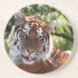 Tiger relaxing drink coaster
