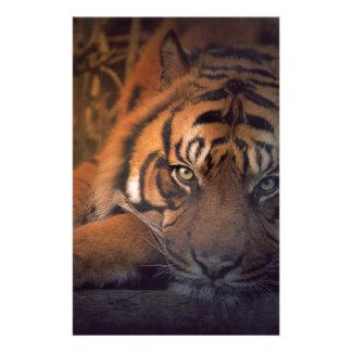 Tiger resting at night stationery