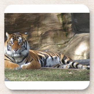Tiger Resting Coaster