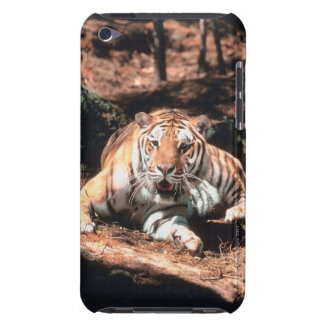 Tiger resting iPod Case-Mate cases