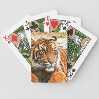 Tiger Resting Portrait Bicycle Playing Cards