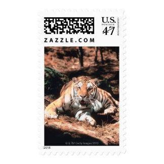 Tiger resting postage