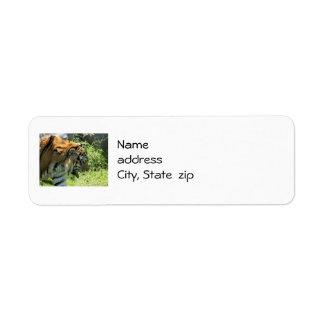 Tiger Return Address Labels