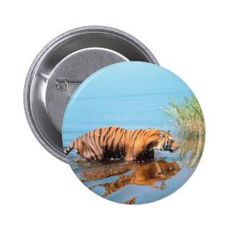 Tiger River Walk 2 Inch Round Button