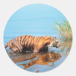 Tiger River Walk Classic Round Sticker